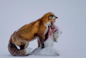 Wildlife Photographer of the Year 2015 1